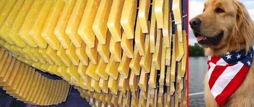 नेपालको छुर्पी अमेरिकी कुकुरको आहारा